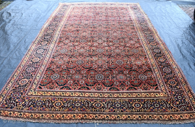 An early North West Persian Carpet with beautiful all over design on glowing red ground. This group of carpets are scarce given their age. This example has even low pile, with few  ...