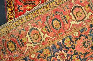 Shirvan Rug 19 th. Powerfull Colors Size 166 x 120 cm, Herati Motiv