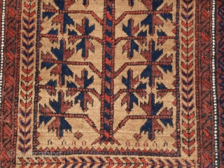 Antique Baluch camel ground prayer rug with tree of life design that is typical of the Baluch of Khorasan. www.knightsantiques.co.uk   Size: 5ft 4in x 2ft 10in (162 x 86cm).   Circa 1900.  The rug  ...
