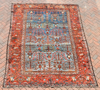 A highly unusual antique Ferahan carpet with beautiful sky-blue ground and an allover design of trees. 