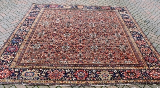 A fine antique Ferahan carpet of highly unusual square format. Allover Herat design woven on glowing madder field flanked by exquisite navy borders. Even low pile, traces of wear. A gracious carpet  ...