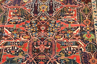A fabulous early Persian Bijar Garrus carpet. This spectacular carpet features the all over split arabesque design synonymous with the town of Garrus and the most sought after of all the designs  ...