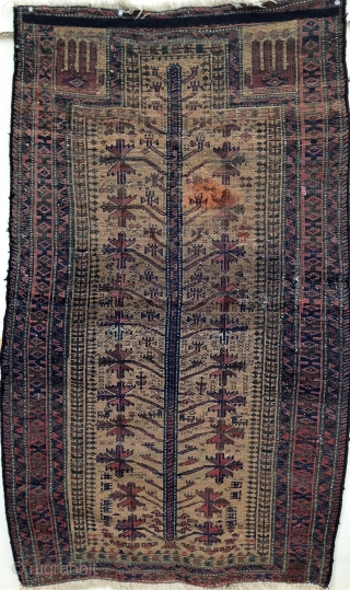 Antique Baluch Tree prayer rug, 32 x 51 inches. Several interesting design features. Sides re-bound; losses at lower end; a few small holes crudely darned.